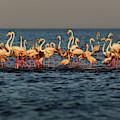 Flamingos On Lake Turkana Outside Elyse by Randy Olson