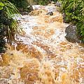 Flash Flood In West Coast Creek Of Nz South Island by Stephan Pietzko