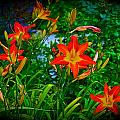 Flashes Of Garden Fire by Tim G Ross