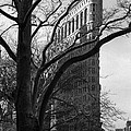 New York Photography - Flatiron With Tree by Dave Beckerman