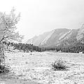 Flatirons Tree - Winter by Aaron Spong