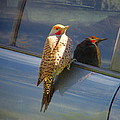 Yellow Shafted Northern Flicker Hanging Around by Joyce Dickens