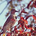 Flicker In Autumn by Melanie Lankford Photography