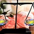 Flickering Light by Belinda Threeths