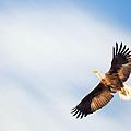 Flight by Bill Wakeley