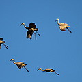 Flight Formation  by Bruce J Robinson