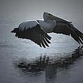 Flight by Kitchner Bain