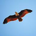 Flight Of Eagle by Jenny Rainbow