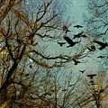 Flight Of The Forest Crows by Gothicrow Images