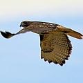 Flight Of The Hawk by Bonfire Photography