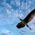 Flight Of The Heron by Bob Orsillo