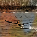 Flight Of The Pelican-featured In Wildlife-newbies And Comfortable Art Groups by Ericamaxine Price