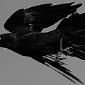 Flight Of The Raven by Bruce J Robinson