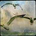 Flight Of The Seagulls by Gothicrow Images