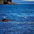 Flight Of The Seagulls by Tara Potts