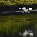 Flight Over Pond by Linda Kerkau