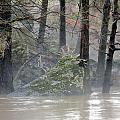 Flint River Rising by Kim Pate