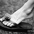 Flip Flop  by John Harmon