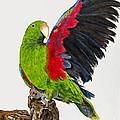 Flirting Parrot By Barbara Heinrichs by Sheldon Kralstein