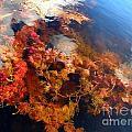 Floating Algae by Sylvie Bouchard