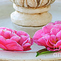 Floating Camellias by Diego Re