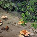 Floating Leaves By George Wood by Karen Adams