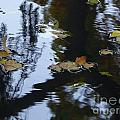 Floating Leaves by Nili Tochner