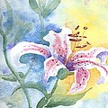 Floating Lily by Jackie Curtis