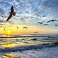 Floating On The Sun Rays by Razvan Balotescu