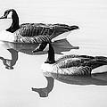 Floating by Susan Warren