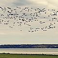 Flock Of Birds by Svetlana Sewell