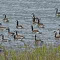 Flock Of Canada Geese   #7116 by J L Woody Wooden