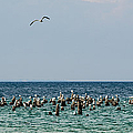 Flock Of Seagulls by Sebastian Musial
