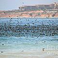 Flocking At Terranea by Toula Mavridou-Messer