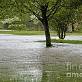 Flooded Park by William Norton