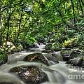 Flooded Small Stream  by Dan Friend