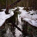 Flooding Forest by Jouko Lehto