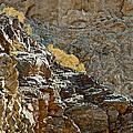 Flora In Sunlight In Big Painted Canyon Trail In Mecca Hills-ca by Ruth Hager