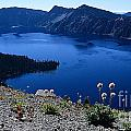 Flora Of Crater Lake by Sharon Elliott