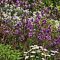 Flora by Svetlana Sewell