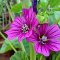 Flora by Syed Suhaib Pasha