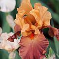Floral 12 by Steve Herndon