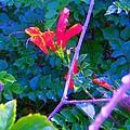Floral 5 by Dan Twyman