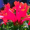 Floral 6 by Dan Twyman
