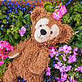 Floral Bear by Thomas Woolworth