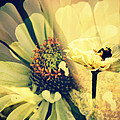Floral Beauty by Alice Gipson