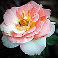 Floral Bee by Elizabeth Winter