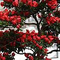 Floral Bonsai by Susan Herber