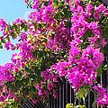 Floral Cascade by Karen Zuk Rosenblatt
