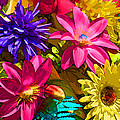 Floral Colors 1 by Ray  White